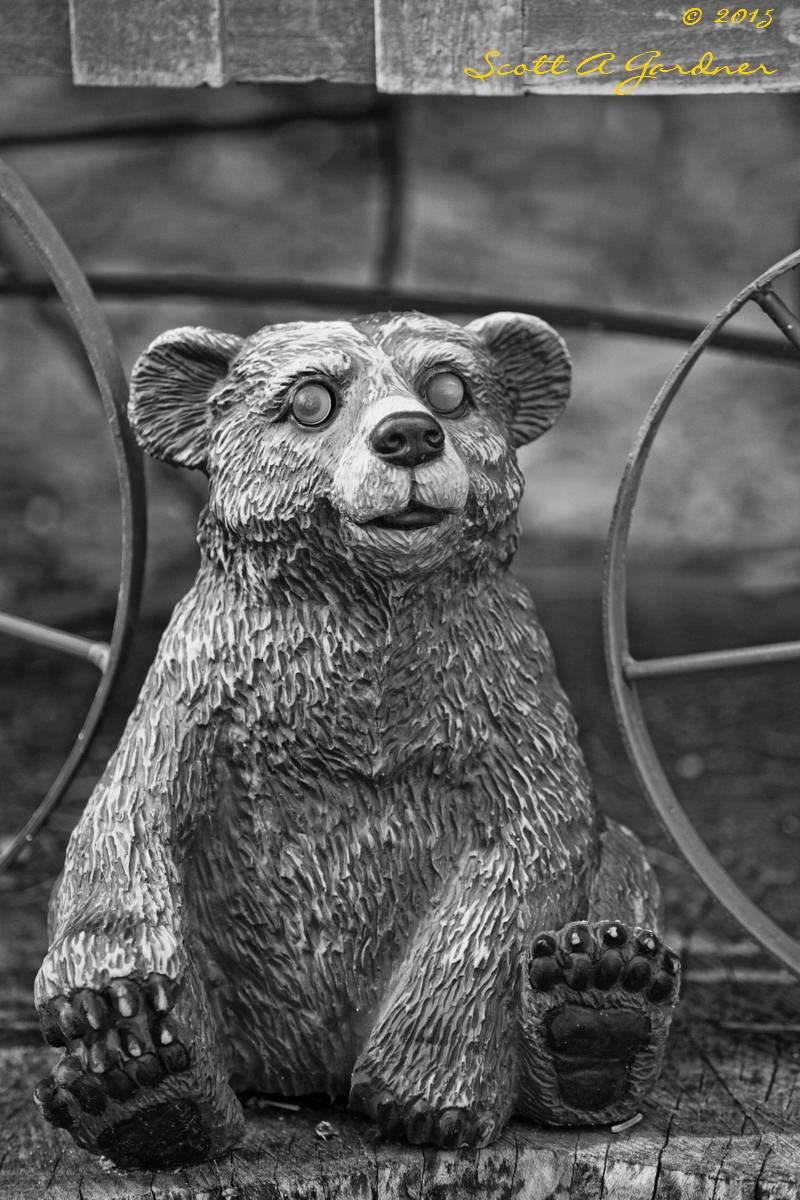 bw_bear